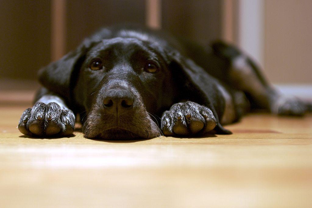 Piso vinílico é o revestimento ideal para casas com pets